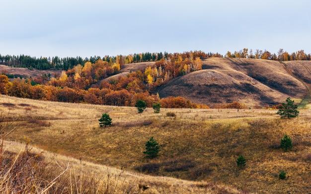 Forêt d'automne sur la colline au jour couvert
