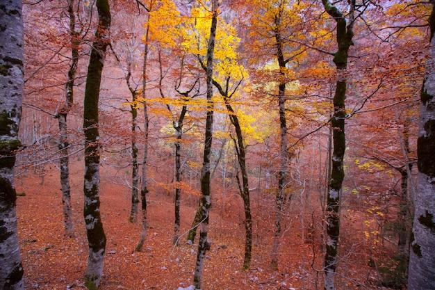 Forêt d'automne dans les pyrénées valle de ordesa huesca espagne