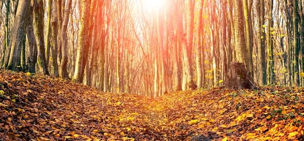 Forêt d'automne avec des feuilles tombées sur la route par temps ensoleillé