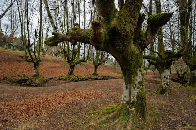 Forêt d'automne avec de grands arbres