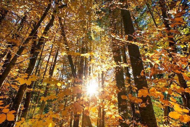 Forêt d'automne par une journée ensoleillée