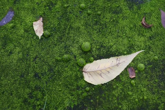 Forêt d'automne recouverte de mousse verte électrique et de feuilles à plat