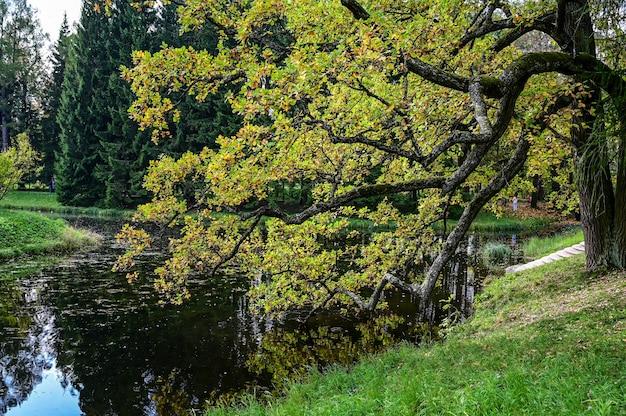 Forêt d'automne et reflet dans le lac. scène inhabituelle dramatique. feuilles d'automne rouges et jaunes. monde de la beauté.