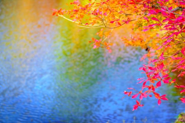 Forêt d'automne avec rivière