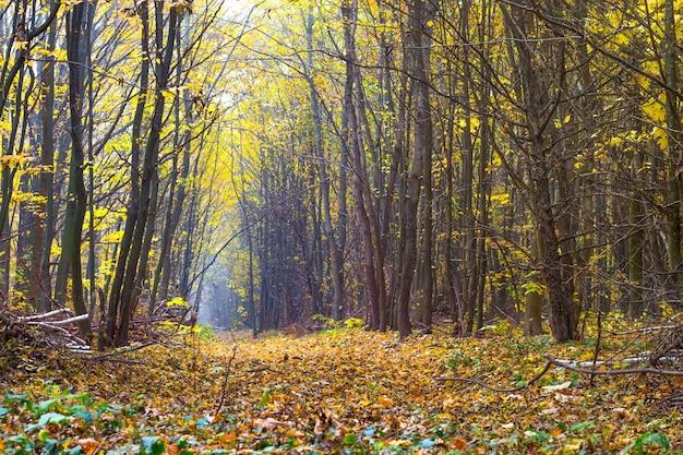 Forêt d'automne avec une route au milieu des arbres