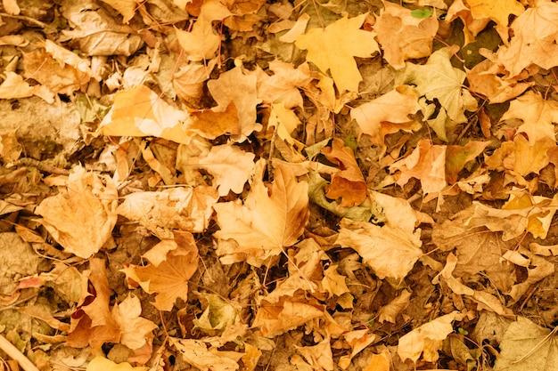 Forêt d'automne. vue de dessus des feuilles tombées fanées sur le sol. fond de nature créative.