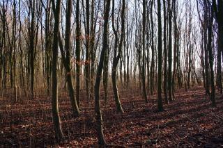 Une forêt à l'automne