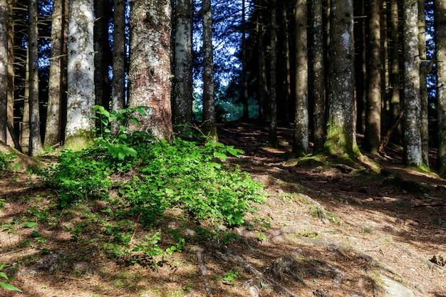 La forêt autour du lac pra da stua dans la province de trente