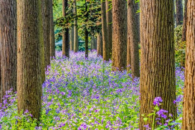 Forêt aux fleurs violettes