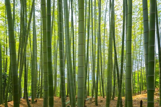 Forêt de bambous arashiyama, kyoto, japon