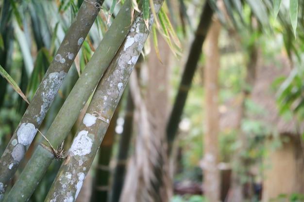 Forêt de bambous à la texture de peau verte et blanche.