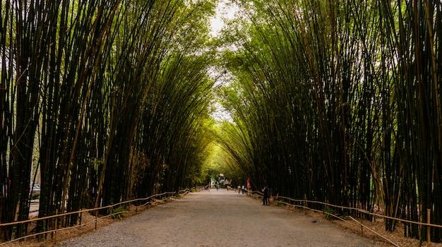 Forêt de bambous en thaïlande