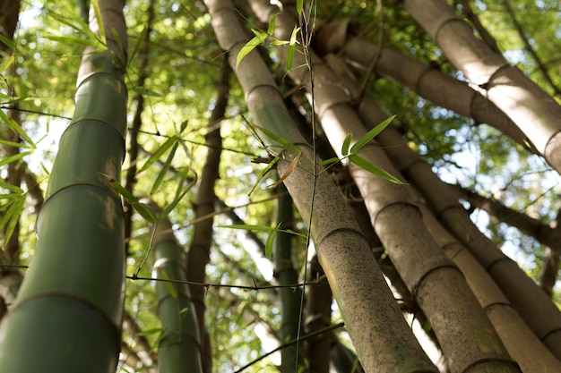 Forêt de bambous tropicaux à la lumière du jour