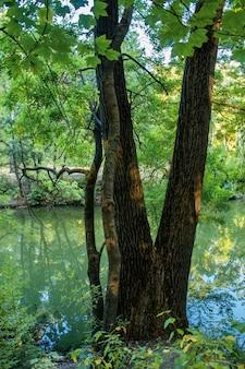 Une forêt avec beaucoup d'arbres et d'arbustes verts et jaunes, les feuilles tombées sur le sol, petit étang au premier plan, chisinau, moldavie