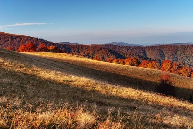 Forêt de bouleaux en après-midi ensoleillé pendant la saison d'automne.