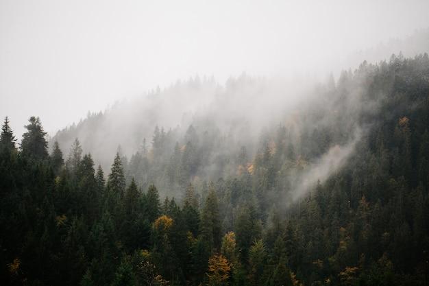 Forêt Avec Brouillard Sur Les Montagnes Photo Premium