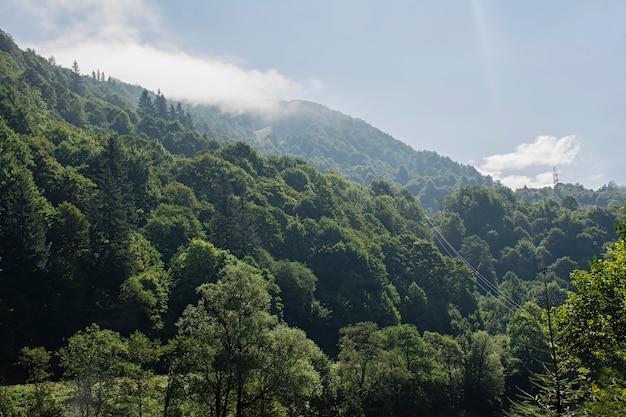 Forêt brumeuse à flanc de montagne dans une réserve naturelle. montagne dans le brouillard
