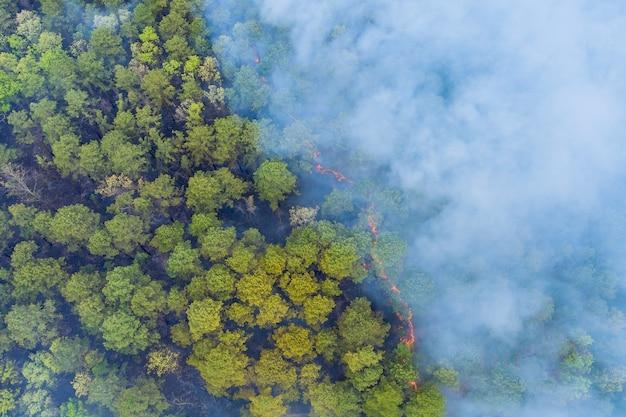 La forêt en californie avec le feu de forêt aérien panoramique brûle les arbres fume l'herbe sèche
