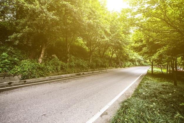 Forêt avec la chaussée