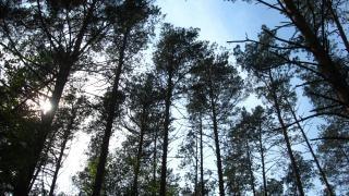 Forêt ciel