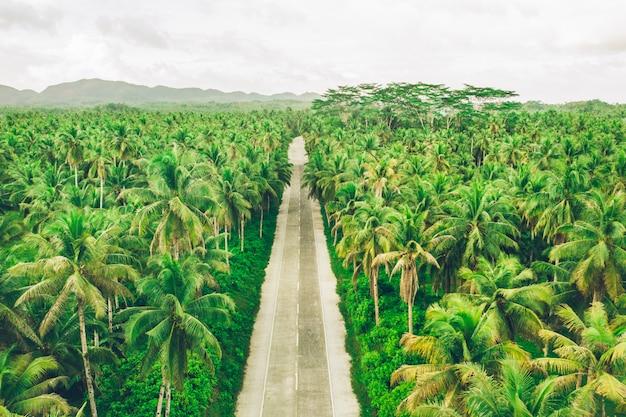 Forêt de cocotiers tropicaux
