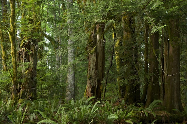 Forêt de la colombie-britannique