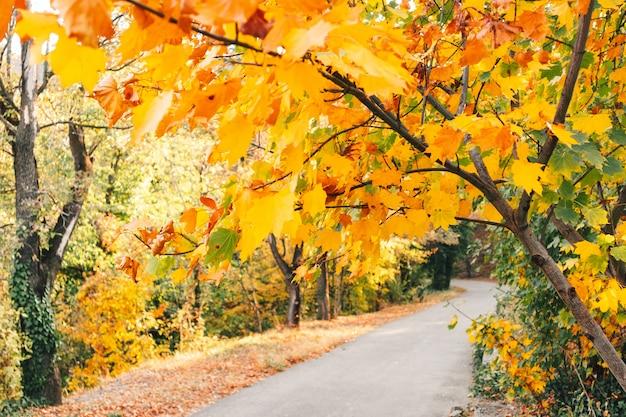 Forêt colorée du jardin botanique national de géorgie à tbilissi, géorgie.