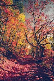 Forêt colorée majestueuse avec des poutres ensoleillées feuilles d'automne lumineuses carpates ukraine europe beauté