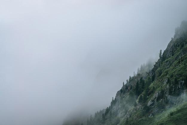 Forêt de conifères à flanc de montagne parmi les nuages bas.