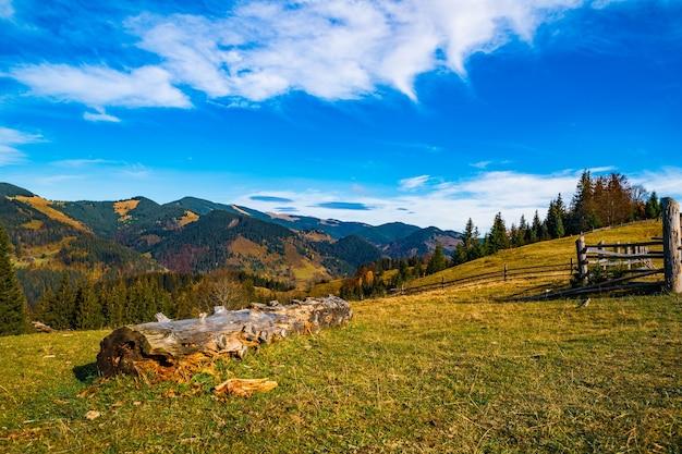 Forêt de conifères mystique dense poussant sur les collines situées à côté de se connecter sur une chaude journée d'été ensoleillée