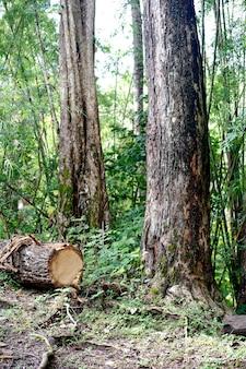 Forêt coupée