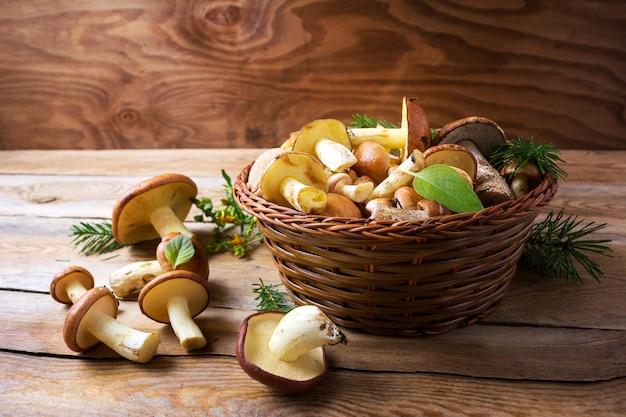 Forêt cueillette de champignons comestibles dans un panier en osier sur bois