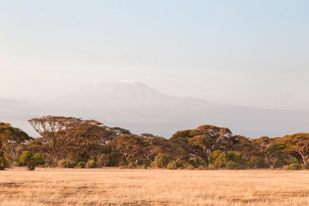 Forêt dans la savane d'amboseli kenya afrique
