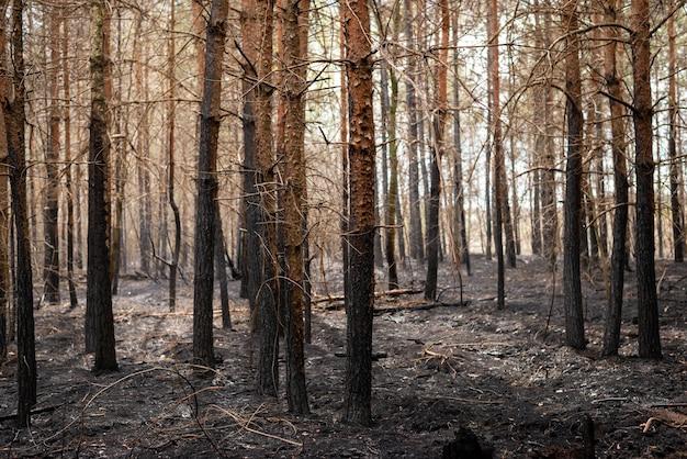 Forêt dévastée après un incendie de forêt