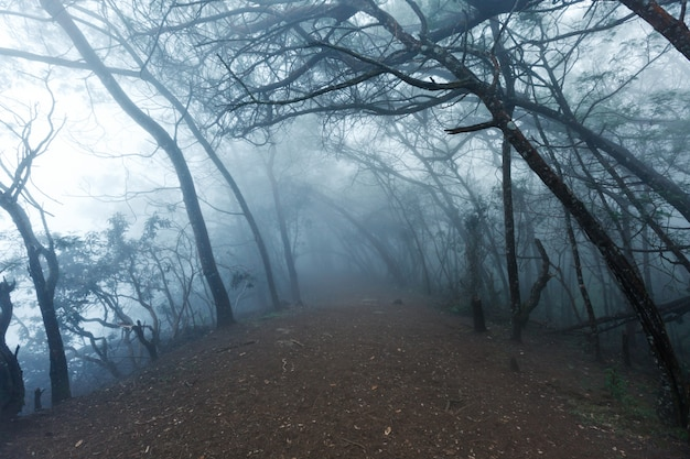 Forêt effrayante brumeuse dans le brouillard