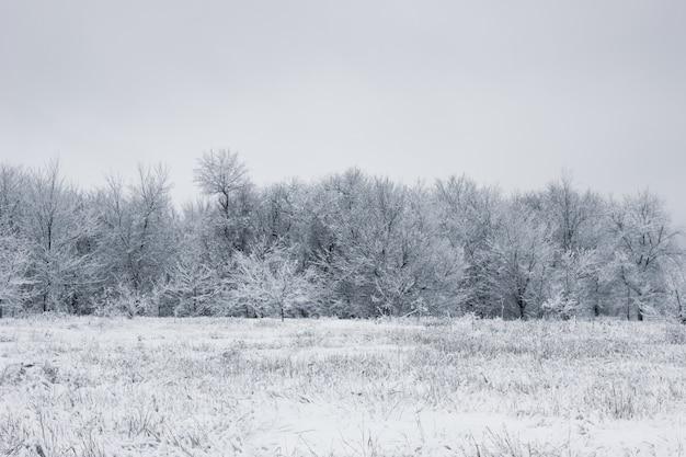 Forêt enneigée. arbres couverts de neige. la forêt dense sous la neige.
