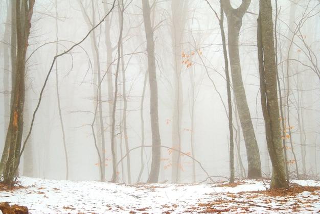 Forêt enneigée d'hiver dans le brouillard dense