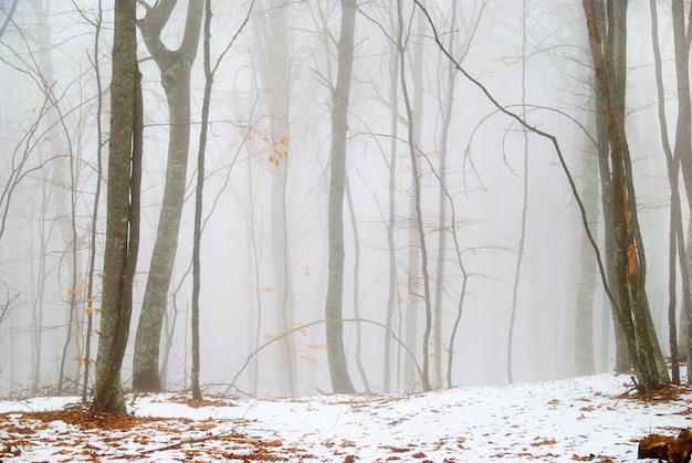 Forêt enneigée d'hiver dans le brouillard dense.