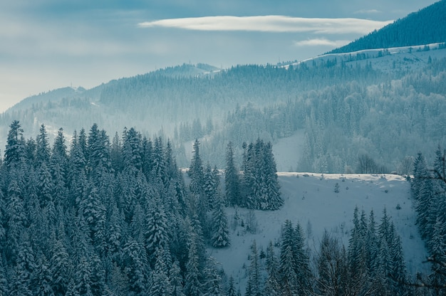 Forêt enneigée de paysage de montagne d'hiver magnifique