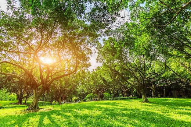 Forêt ensoleillée et prairie dans le parc
