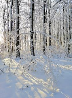 Forêt entourée d'arbres couverts de neige sous la lumière du soleil à larvik en norvège