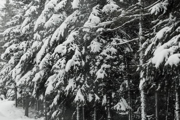 Forêt épaisse et neigeuse