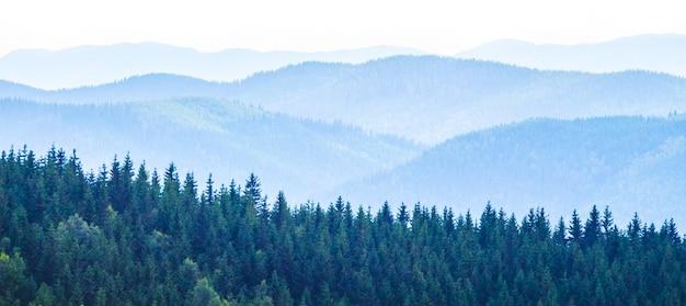 Forêt d'épinettes dense sur fond de montagnes bleu clair_
