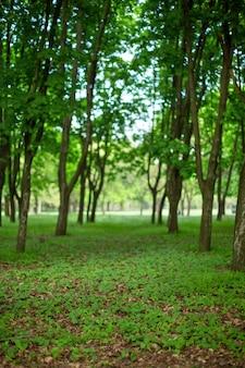 Forêt d'été verte. allée dans le parc. flou, bokeh