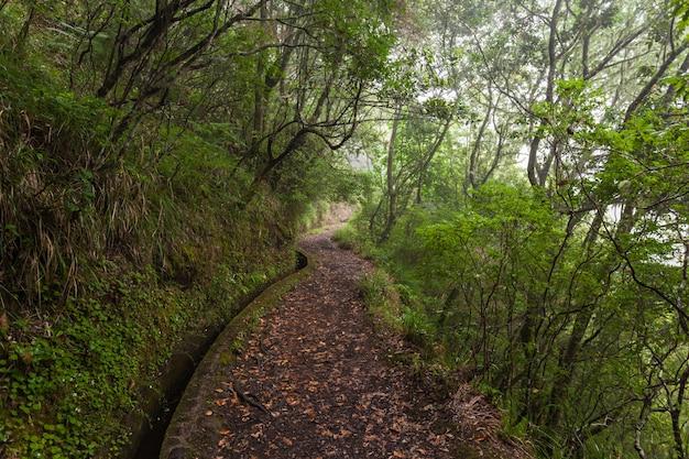 Forêt fantastique, île de madère
