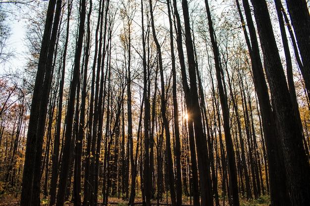 Forêt feuilles automne fond toile de fond texture tombe halloween