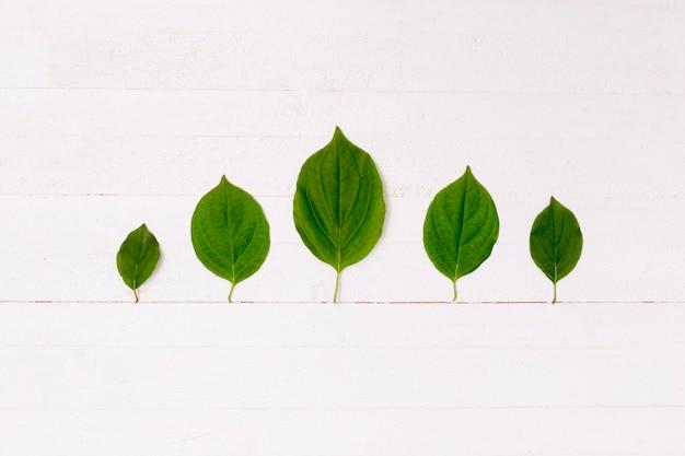 Forêt de feuilles avec ligne de terre