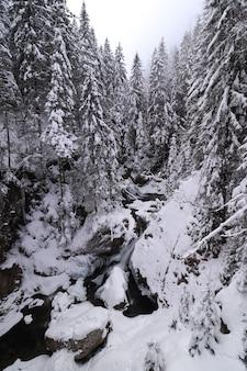 Forêt à feuilles persistantes et quelques rochers en hiver, tous couverts de neige