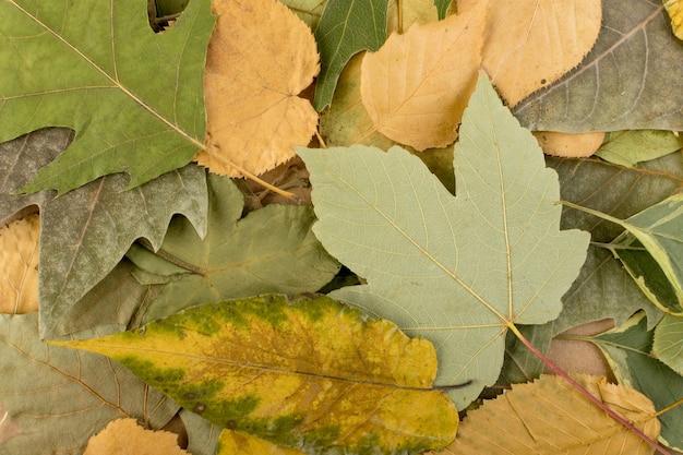 Forêt feuilles texture arrière plan vue de dessus