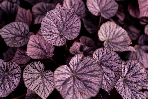 Forêt de feuilles tropicales luit dans la forme de coeur fond sombre de l'amour belle texture